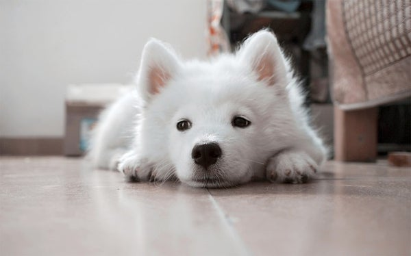 dog_White_puppy