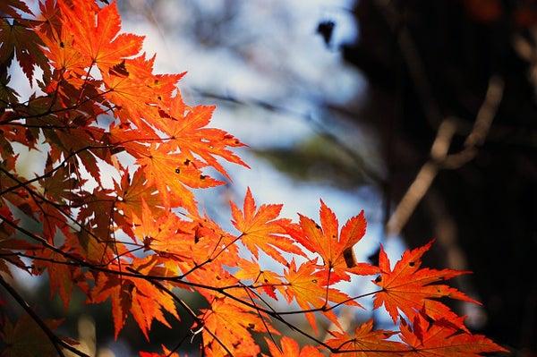 栃木県の紅葉