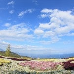 栃木の花畑