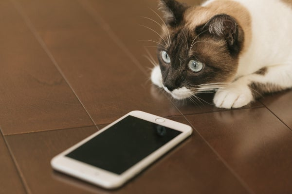 アプリを利用した電話サービス