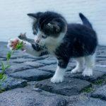 弱い立場の植物を守ろうとする猫