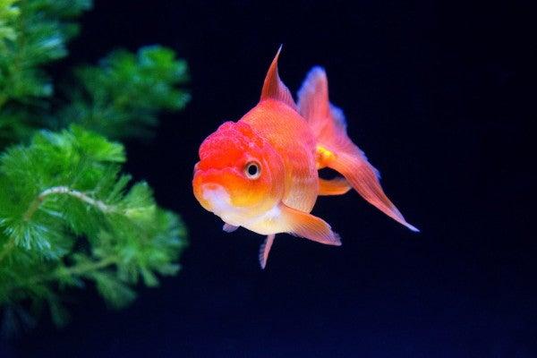 ペット禁止の物件で飼われる熱帯魚